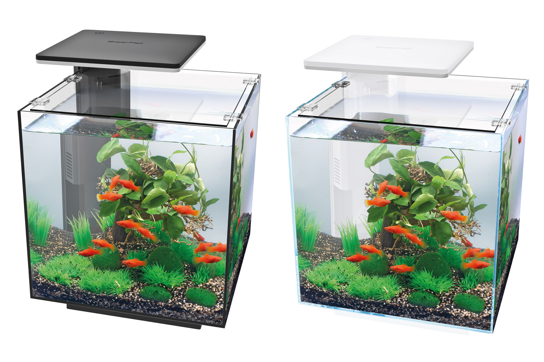 Akvarier Akvariebutik | Akvarie Neonfisken